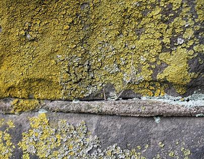 Lichen et al.