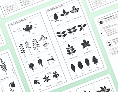 Flower Finder   Redesign