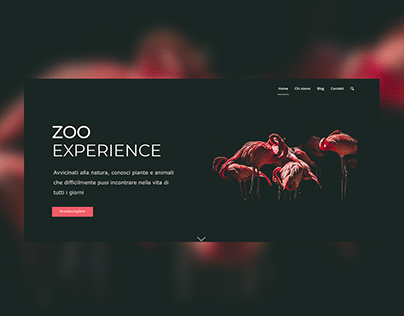 Zoo experience - Site Web