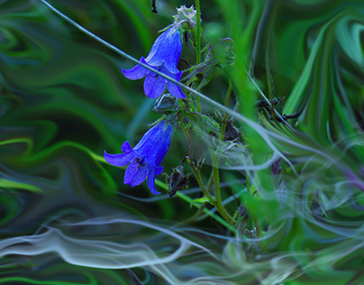 Flowers bells and butterfly