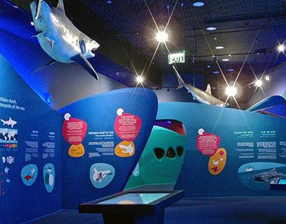 Eilat shark aquarium