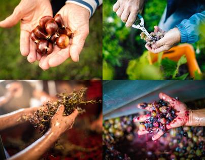 The Hands of Food & Wine