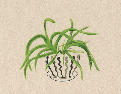 Plants and Health: Indoor air quality