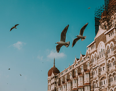 Taj Morning