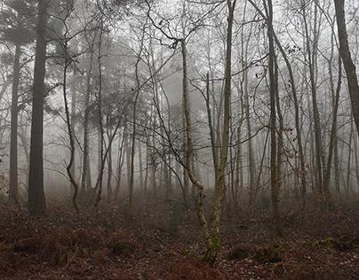 Foggy Woodland Walk