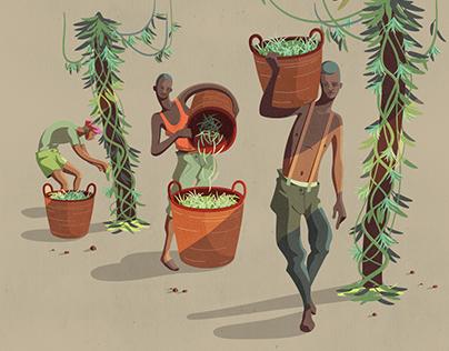 Madagascar - Vanilla Harvesters