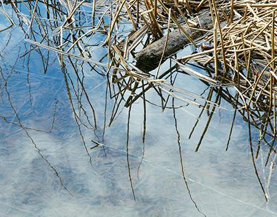 Among Nature 2013 calendar