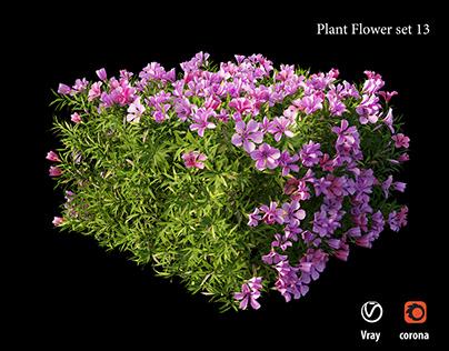 Plant flower set 13