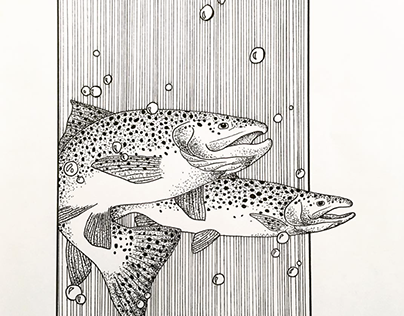 Pen and Ink Rainbow Trout