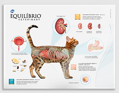 Physiological Poster - Cat | Total Alimentos