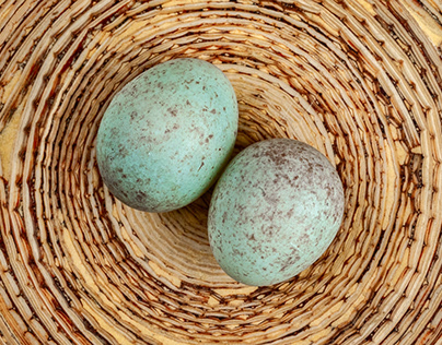 Feathers and Eggs