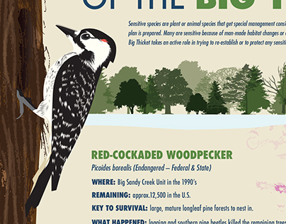 Big Thicket Infographics