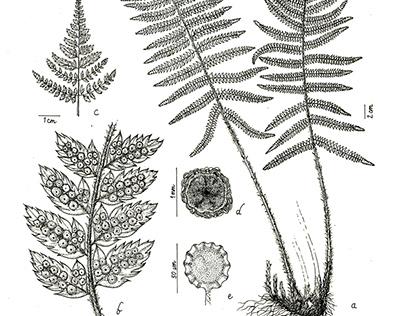 Ilustraciones científicas Blanco y negro