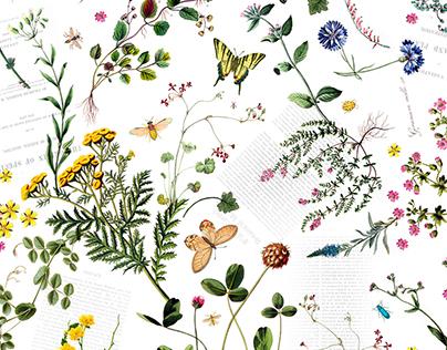 The Origin Of The Species (Lojas Renner)
