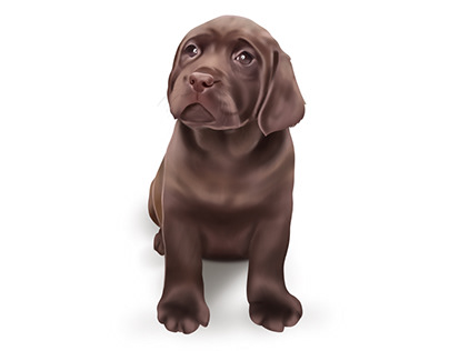 River - The Brown Lab