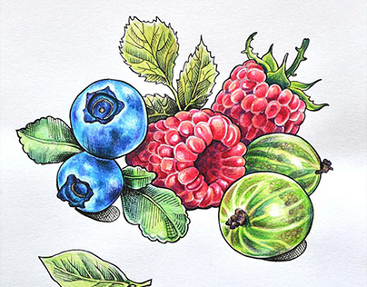 Food colourpencil illustrations