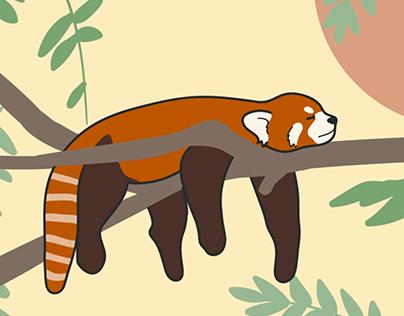 Red Panda Motion Graphic