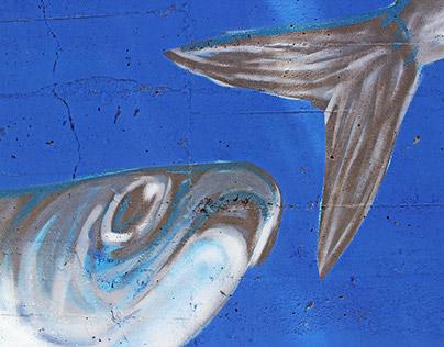 Sesimbra is fresh fish