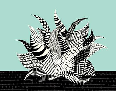 Haworthia Succulent Artwork