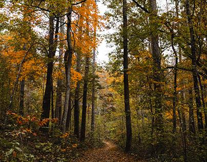 Walk Though Fall