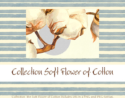 Collection Soft Flower of Cotton WATERCOLOR ELEMENTS FO