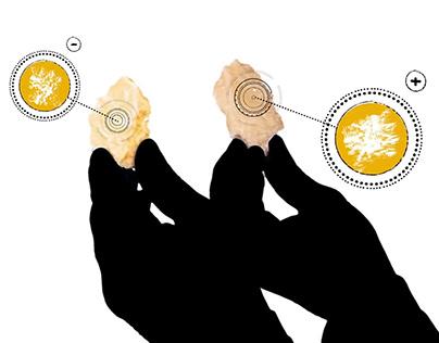 Parmigiano Reggiano — Il Gusto di Conoscere