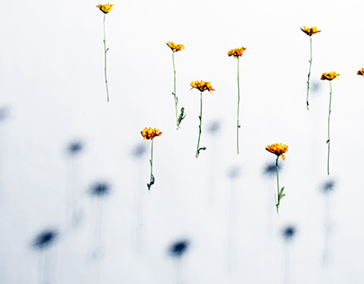 Suspended flowers