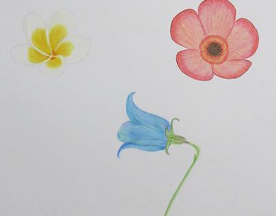 色鉛筆 花