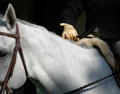 equestrian potraits