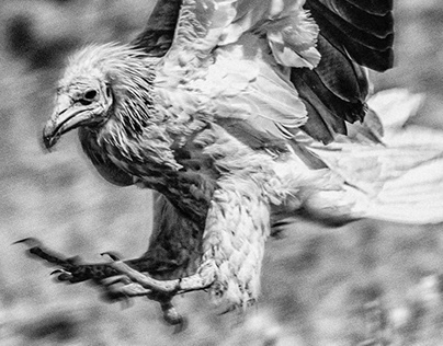 Lockdown bird photography
