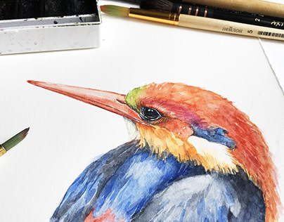 Black-backed Kingfisher watercolor illustration.