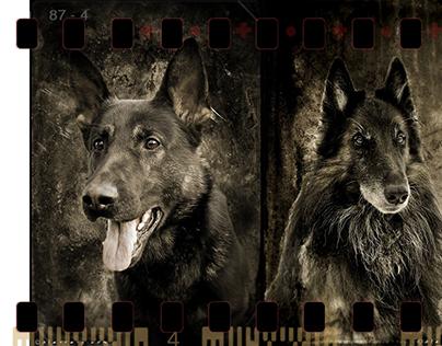 Photography Artwork: Animal Art Prints Suomi