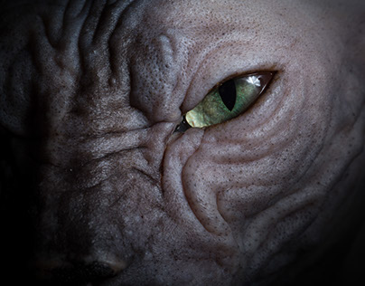 The Disturbing Beauty of Sphynx Cats