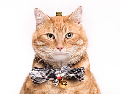 Pet Portrait - Cats
