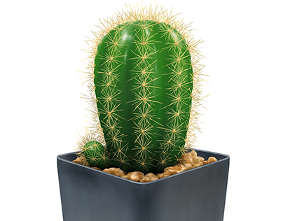 Small Green Cactus with plastic flower pot