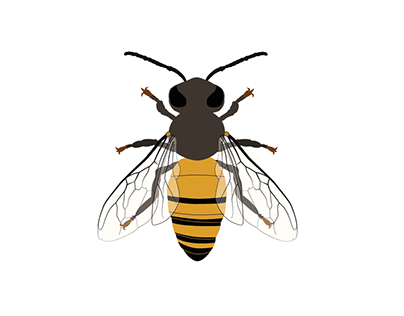 a B — simpe illustration of a Bee