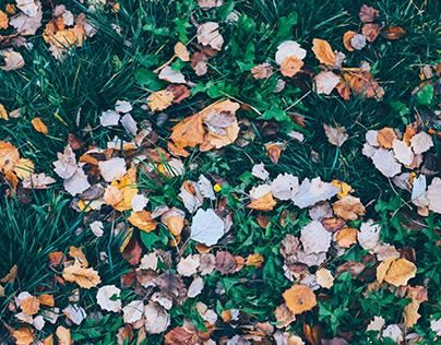 Autumn parks