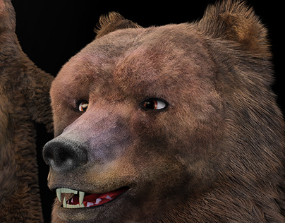 3D bear for a video