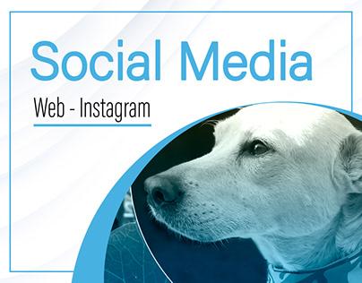 Social Media / Web - Instagram