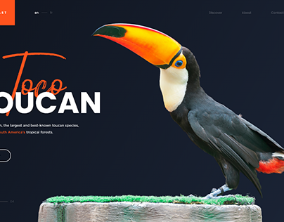 Wildfeast | Toco Toucan