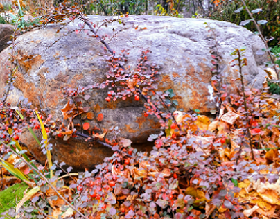 Stone and barberry.