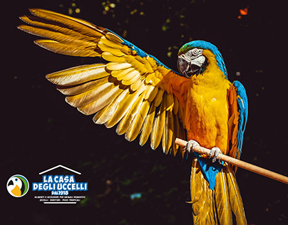 La Casa Degli Uccelli