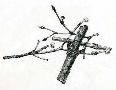 Botanical Illustration, 2016
