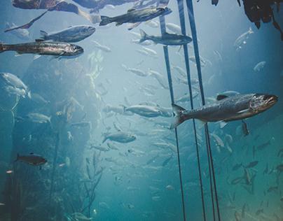 Seattle, WA: Aquarium