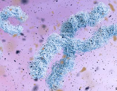 Happy Chromosomes