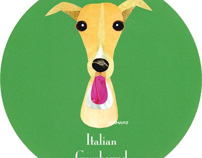 007 | Italian Greyhound (Fawn)