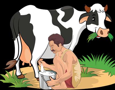 Indian milkman Milking a cow