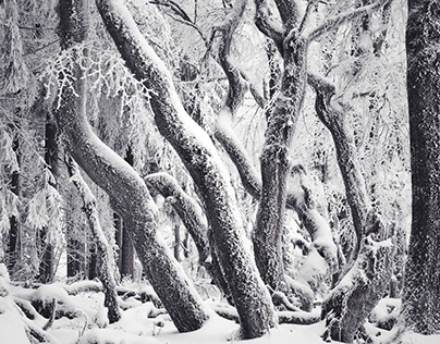 Tangles of My Winter Mind