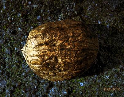 Golden Walnut Shell