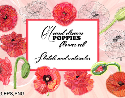 Hand drawn poppies flowers set. Sketch and vector water